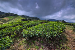 Cameron Highlands Stock Foto's