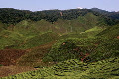 Cameron Highlands Stock Photography