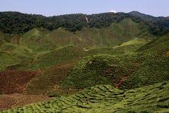 Cameron Highlands. Boh Tea plantation, Cameron Highlands Stock Photography