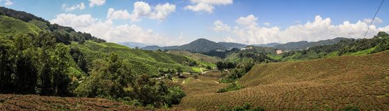 Panorama on the cameron Highlands tea hills near Brinchang, Malaysia. The Cameron Highlands is a highland situated at about 150 kilometers North of Kuala Lumpur stock photo