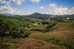 The tea hills of the Cameron highlands near Brinchang, Malaysia. The Cameron Highlands is a highland situated at about 150 kilometers North of Kuala Lumpur, and royalty free stock photo