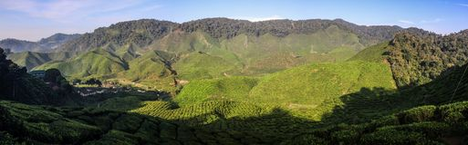 Panorama on the Cameron highlands tea hills near Brinchang, Malaysia. The Cameron Highlands is a highland situated at about 150 kilometers North of Kuala Lumpur stock images