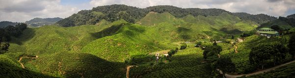 Panorama on the Cameron highlands tea hills near Brinchang, Malaysia. The Cameron Highlands is a highland situated at about 150 kilometers North of Kuala Lumpur stock image
