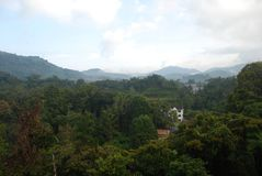 Cameron Highlands Jungle. Panorama of pure jungle and mountain in Cameron Highlands, Malaysia royalty free stock photos