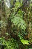 Cameron Highlands Jungle Trail No 1 royalty-vrije stock afbeeldingen