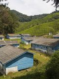 Cameron Highlands Malaysia. Workers shacks Cameron Highlands Malaysia Royalty Free Stock Photo