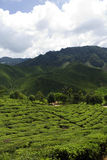 Cameron highlands panorama stock images