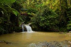 Cameron Highlands Parit Falls som trekking arkivbild