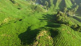 Cameron Highlands: Plantação de chá de Boh fotografia de stock royalty free