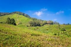 Cameron Highlands Tea Plantation Malaysia fotos de stock