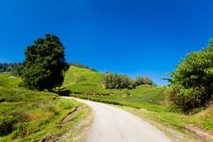 Cameron Highlands Tea Plantation Malaysia foto de stock