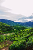 Cameron Highlands Royalty Free Stock Photo