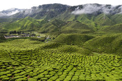 Cameron Highlands Tea Plantation Malaysia Photos libres de droits