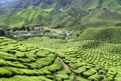 Cameron Highlands Tea Plantation Malaysia Photo stock