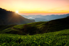 Cameron highlands Royalty Free Stock Photography