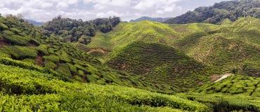 Cameron Highlands Tea Plantation Panorama Imágenes de archivo libres de regalías