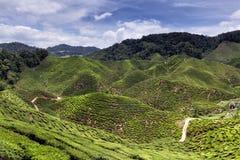 Cameron Highlands Tea Plantation Panorama Fotografía de archivo