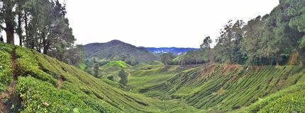 Cameron Highlands tea plantation. Panoramic view of Sungai Palas tea plantation in Cameron highlands in peninsular Malaysia stock image