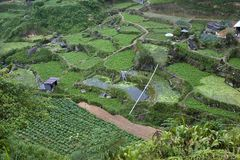 Cameron Highlands Vegetable Fields Royalty Free Stock Photo
