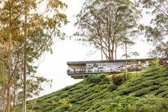 CAMERON-HOCHLÄNDER, MALAYSIA, AM 6. APRIL 2019: Teemitte BOH Sungai Palas bietet szenische Ansicht mit Café und Geschäft, populär lizenzfreie stockfotografie