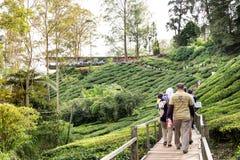 CAMERON-HOCHLÄNDER, MALAYSIA, AM 6. APRIL 2019: Touristisch, ihre Weise zur Teemitte BOH Sungai Palas, populäre Tourismusstelle m stockbild