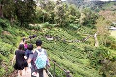 CAMERON-HOCHLÄNDER, MALAYSIA, AM 6. APRIL 2019: Touristisch, ihre Weise zur Teemitte BOH Sungai Palas, populäre Tourismusstelle m stockbilder