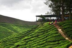 cameron średniogórze Malaysia Fotografia Stock