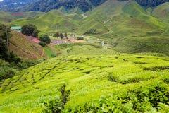 Cameron średniogórzy Bharat herbaciana plantacja Zdjęcie Royalty Free