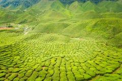 Cameron średniogórzy Bharat herbaciana plantacja Zdjęcie Stock