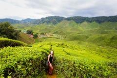 Cameron średniogórzy Bharat herbaciana plantacja Zdjęcia Stock