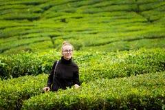 Cameron średniogórzy Boh herbaciana plantacja Obrazy Stock