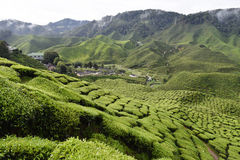 Cameron średniogórzy Herbaciana plantacja Malezja Obraz Stock