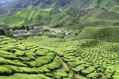 Cameron średniogórzy Herbaciana plantacja Malezja Zdjęcie Stock