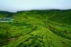 cameron średniogórzy plantaci herbata Obrazy Stock