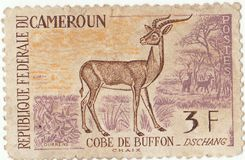 Cameroon postage stamp. Old cameroon postage stamp with buffon royalty free stock images