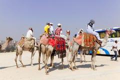 cames Egypt Giza zaludniają ostrosłup Obraz Royalty Free