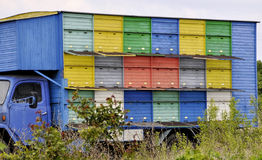 Camión con las colmenas para las abejas que se colocan en el campo Colección de miel Imagen de archivo libre de regalías