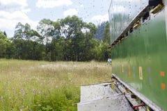 Camión de la abeja Foto de archivo libre de regalías