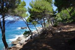 Cami de Pintors在沿海费用的杉木森林里 免版税库存照片