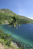 Camiguin island palm tree philippines stock image