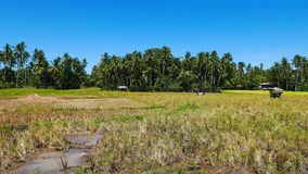 Camiguin rice fields stock footage