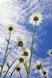 Camile sur le fond de ciel Photos libres de droits