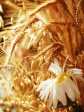 Camille&grain Royalty Free Stock Images