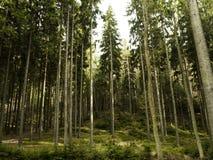 Caminado en bosque Imágenes de archivo libres de regalías
