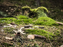 Caminado en bosque Fotos de archivo