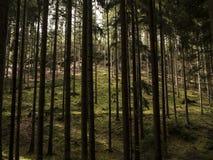 Caminado en bosque Fotos de archivo libres de regalías