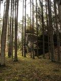Caminado en bosque Imagenes de archivo
