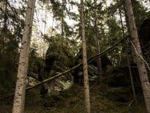 Caminado en bosque Foto de archivo libre de regalías