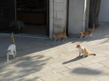 Caminando cuatro gatos rojos Fotos de archivo