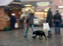 Caminando el perro en la calle Foto de archivo libre de regalías